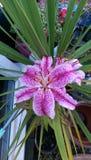 Ogrodowy kwiat Obraz Stock