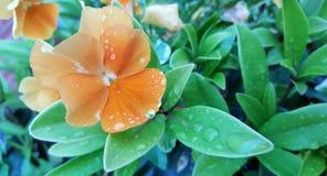 Ogrodowy kwiat Zdjęcia Stock