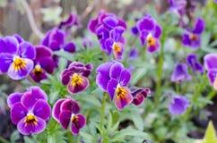 Ogrodowy kwiat obrazy stock