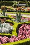 Ogrodowy kwiat w parku. Obraz Stock