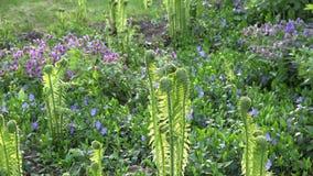 Ogrodowy kwiatu łóżko pełno paproć kwiaty w wiośnie i rośliny 4K zbiory wideo