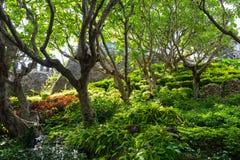 Ogrodowy las Zdjęcia Royalty Free