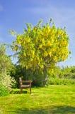 ogrodowy lato Zdjęcia Stock