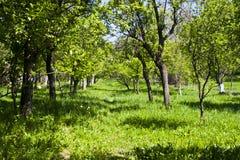 ogrodowy lato Zdjęcie Royalty Free