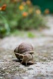 ogrodowy ślimaczek Obrazy Royalty Free