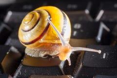Ogrodowy ślimaczek na czarnej komputerowej klawiaturze Fotografia Stock