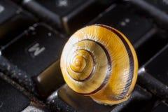 Ogrodowy ślimaczek na czarnej komputerowej klawiaturze Fotografia Royalty Free
