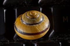 Ogrodowy ślimaczek na czarnej komputerowej klawiaturze Obraz Royalty Free