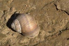 Ogrodowy ślimaczek na krakingowej ziemi Fotografia Stock