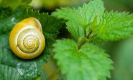Ogrodowy ślimaczek przy odpoczynkiem Obraz Royalty Free