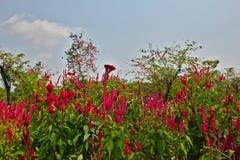 Ogrodowy parkland obrazy stock