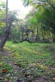 Ogrodowy parkland Obraz Stock