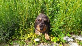 Ogrodowy pies obraz stock