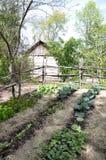 ogrodowy pionierski warzywo Fotografia Royalty Free