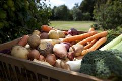 ogrodowy produkty spożywcze Fotografia Royalty Free