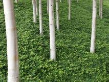 Ogrodowy projekt - Akcyjny wizerunek obraz stock