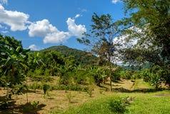 Ogrodowy projekt z drewnem w Tajlandzkim stylu Obraz Royalty Free