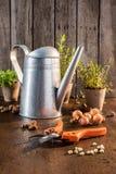Ogrodowy pruner na drewnianym stole Fotografia Stock