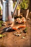 Ogrodowy pruner na drewnianym stole Zdjęcie Royalty Free