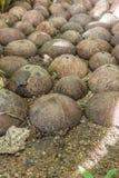 Ogrodowy przejście brukujący od kokosowych skorup Zdjęcia Stock