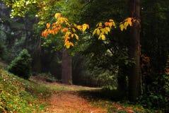 ogrodowy przejście Obrazy Royalty Free
