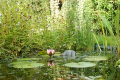 Ogrodowy przyroda staw Zdjęcia Royalty Free