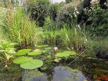 Ogrodowy przyroda staw Zdjęcie Stock