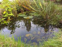 Ogrodowy przyroda staw fotografia royalty free