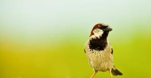 Ogrodowy ptak zdjęcie stock