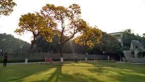 Ogrodowy ranek Zdjęcia Royalty Free