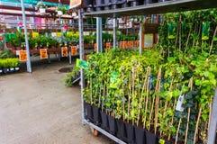 Ogrodowy sklep Obraz Royalty Free