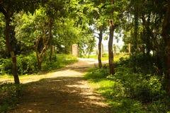 Ogrodowy sposób z drzewną i zieloną trawą obrazy royalty free