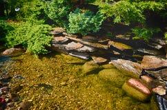 Ogrodowy staw fotografia stock
