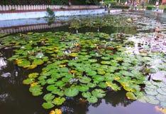Ogrodowy staw Zdjęcie Stock
