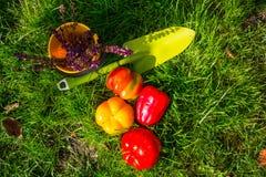 Ogrodowy tool Zdjęcie Royalty Free