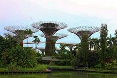 Ogrodowy Tree3 Zdjęcie Stock