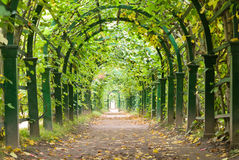 Ogrodowy tunel obraz royalty free
