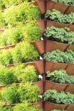 ogrodowy vertical Zdjęcie Royalty Free