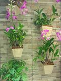 ogrodowy vertical Obrazy Stock