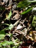 Ogrodowy wąż Zdjęcie Royalty Free