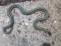 Ogrodowy wąż Obrazy Stock