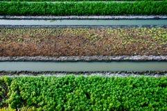 ogrodowy warzywo Obrazy Stock