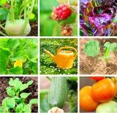 ogrodowy warzywo Zdjęcie Royalty Free