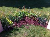 ogrodowy warzywo Fotografia Royalty Free
