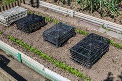 ogrodowy warzywo Zdjęcia Stock