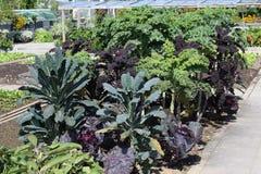 ogrodowy warzywo Obrazy Royalty Free