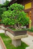Ogrodowy widok. Bonsai zdjęcie stock