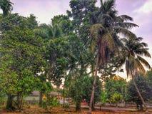 ogrodowy widok w niektóre drzewach zdjęcie stock