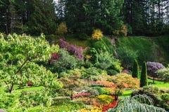 ogrodowy zapadnięty Obraz Royalty Free