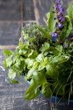 ogrodowy ziele Fotografia Stock